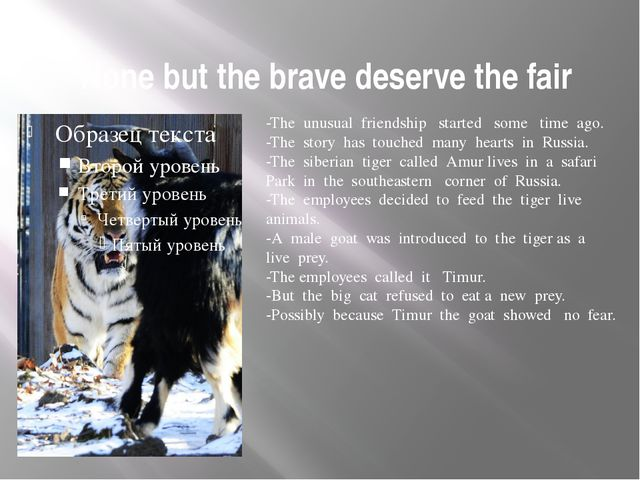 None but the brave deserve the fair -The unusual friendship started some tim...