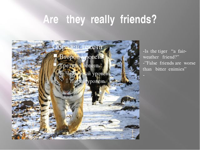 "Are they really friends? -Is the tiger ""a fair- weather friend?"" -""False frie..."