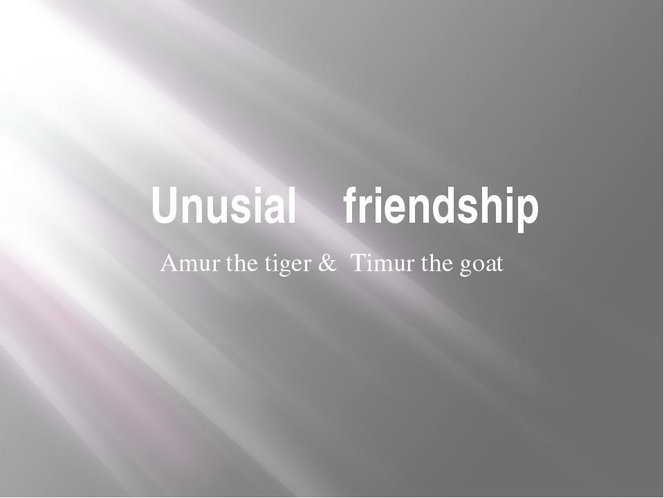 Unusial friendship Amur the tiger & Timur the goat
