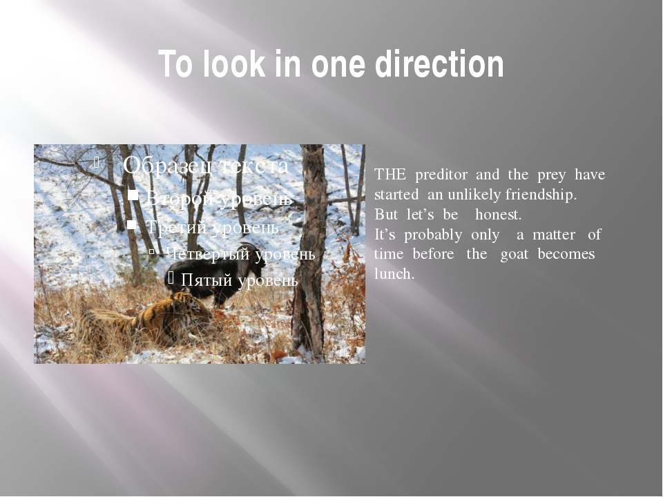 To look in one direction THE preditor and the prey have started an unlikely f...