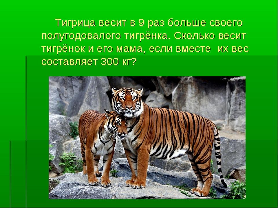 Тигрица весит в 9 раз больше своего полугодовалого тигрёнка. Сколько весит т...