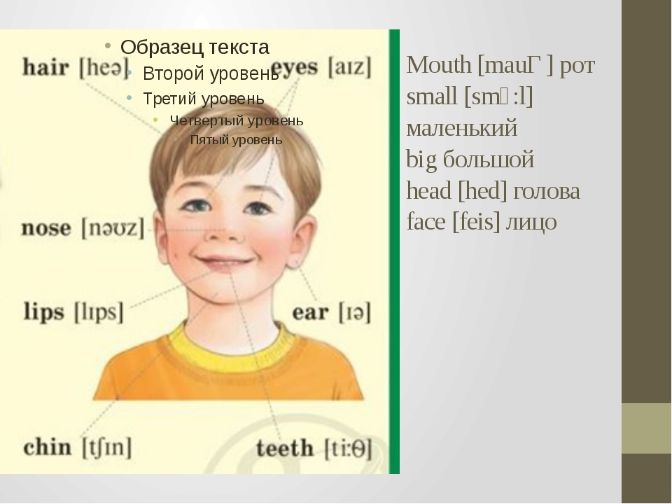 Mouth [mauƟ] рот small [smͻ:l] маленький big большой head [hed] голова face [...