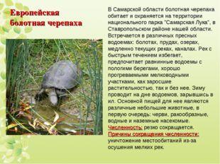 Европейская болотная черепаха В Самарской области болотная черепаха обитает и