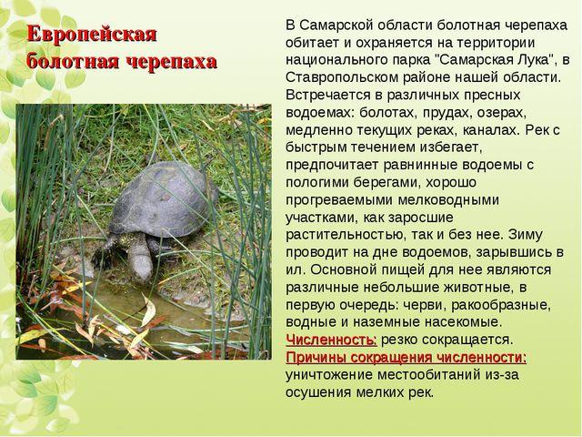 Европейская болотная черепаха В Самарской области болотная черепаха обитает и...