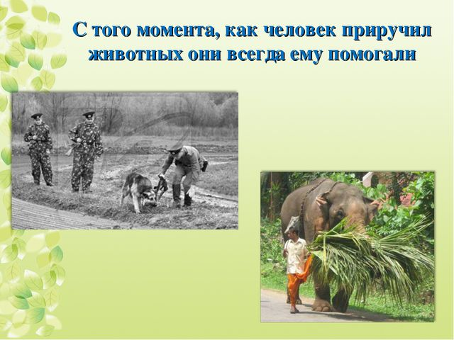 С того момента, как человек приручил животных они всегда ему помогали