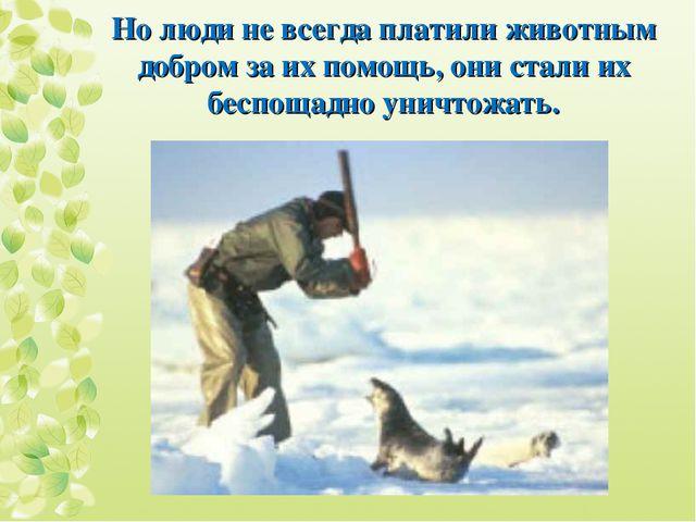 Но люди не всегда платили животным добром за их помощь, они стали их беспощад...