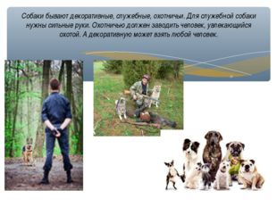 Собаки бывают декоративные, служебные, охотничьи. Для служебной собаки нужны