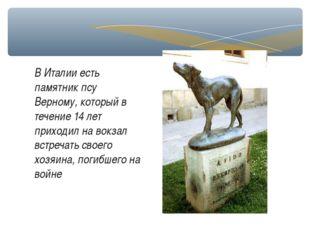 В Италии есть памятник псу Верному, который в течение 14 лет приходил на вокз