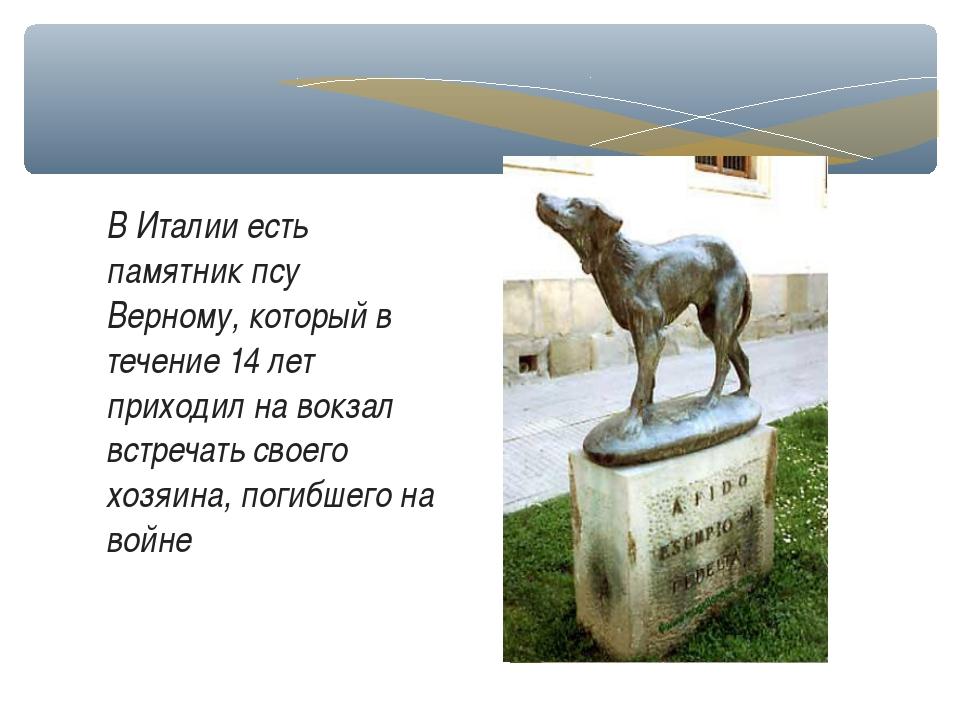 В Италии есть памятник псу Верному, который в течение 14 лет приходил на вокз...