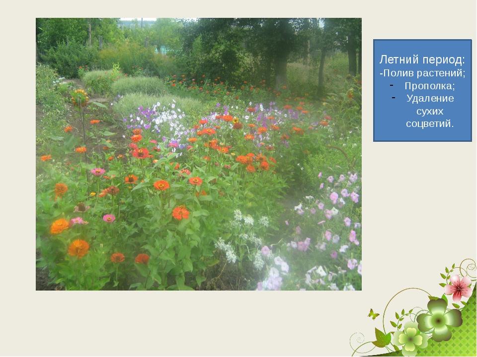 Летний период: -Полив растений; Прополка; Удаление сухих соцветий.