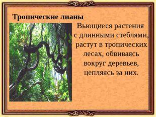 Тропические лианы Вьющиеся растения с длинными стеблями, растут в тропических