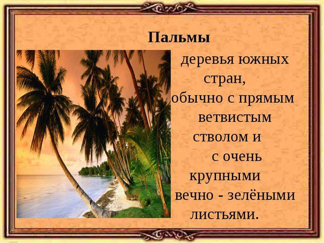 Пальмы деревья южных стран, обычно с прямым ветвистым стволом и с очень крупн...