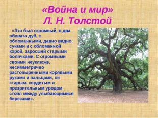 «Война и мир» Л. Н. Толстой «Это был огромный, в два обхвата дуб, с обломанны