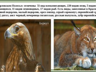 В «Орловском Полесье» отмечены 51 вид млекопитающих, 220 видов птиц, 5 видов
