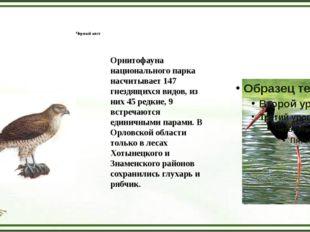 Орел-змееяд Черный аист Орнитофауна национального парка насчитывает 147 гнез