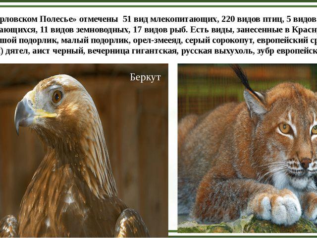 В «Орловском Полесье» отмечены 51 вид млекопитающих, 220 видов птиц, 5 видов...