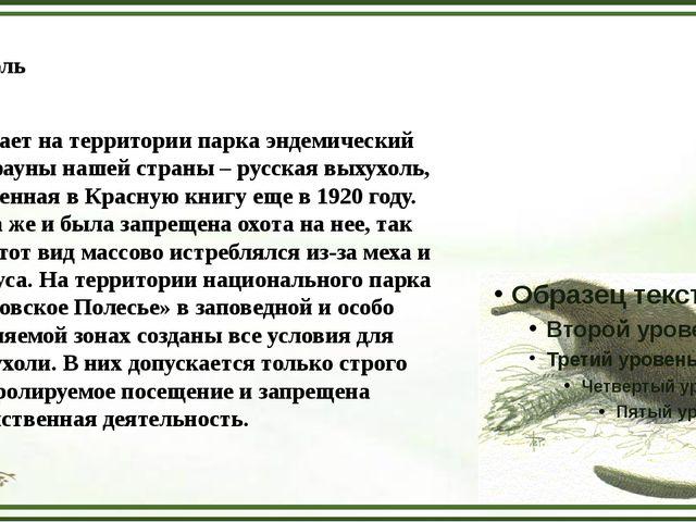 Выхухоль Обитает на территории парка эндемический вид фауны нашей страны – ру...