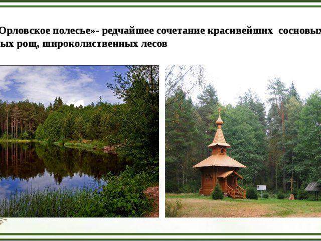 Парк «Орловское полесье»- редчайшее сочетание красивейших сосновых боров, бер...