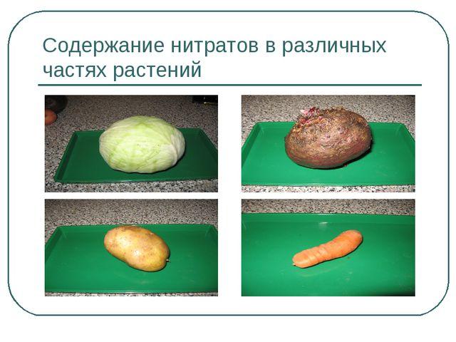 Содержание нитратов в различных частях растений