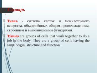 Словарь Ткань - система клеток и межклеточного вещества, объединённых общим п