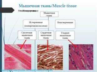 Мышечная ткань/Muscle tissue Видео https://www.youtube.com/watch?v=JIGDC7Go2WQ