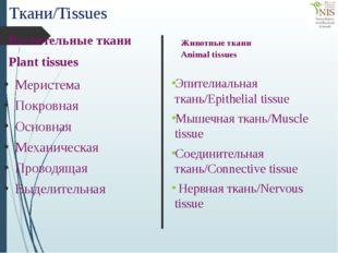 Ткани/Tissues Меристема Покровная Основная Механическая Проводящая Выделитель