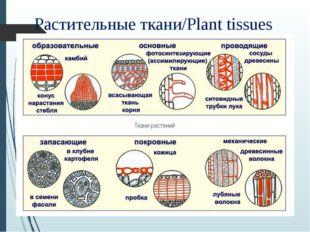 Растительные ткани/Plant tissues