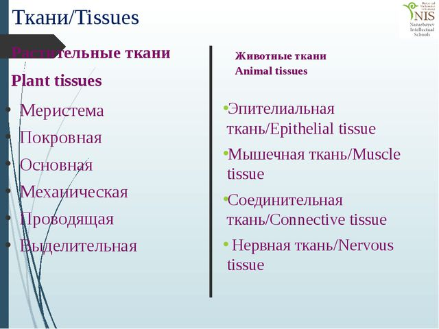 Ткани/Tissues Меристема Покровная Основная Механическая Проводящая Выделитель...