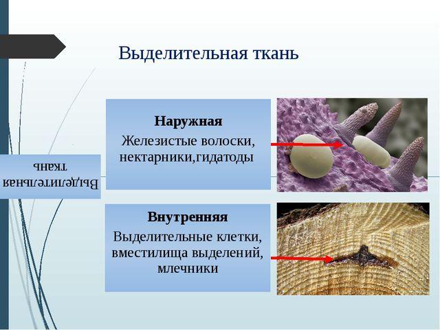 Выделительная ткань