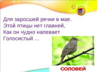 Для заросшей речки в мае. Этой птицы нет главней, Как он чудно напевает Голос
