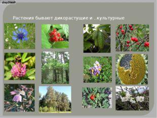 Растения бывают дикорастущие и ….. культурные