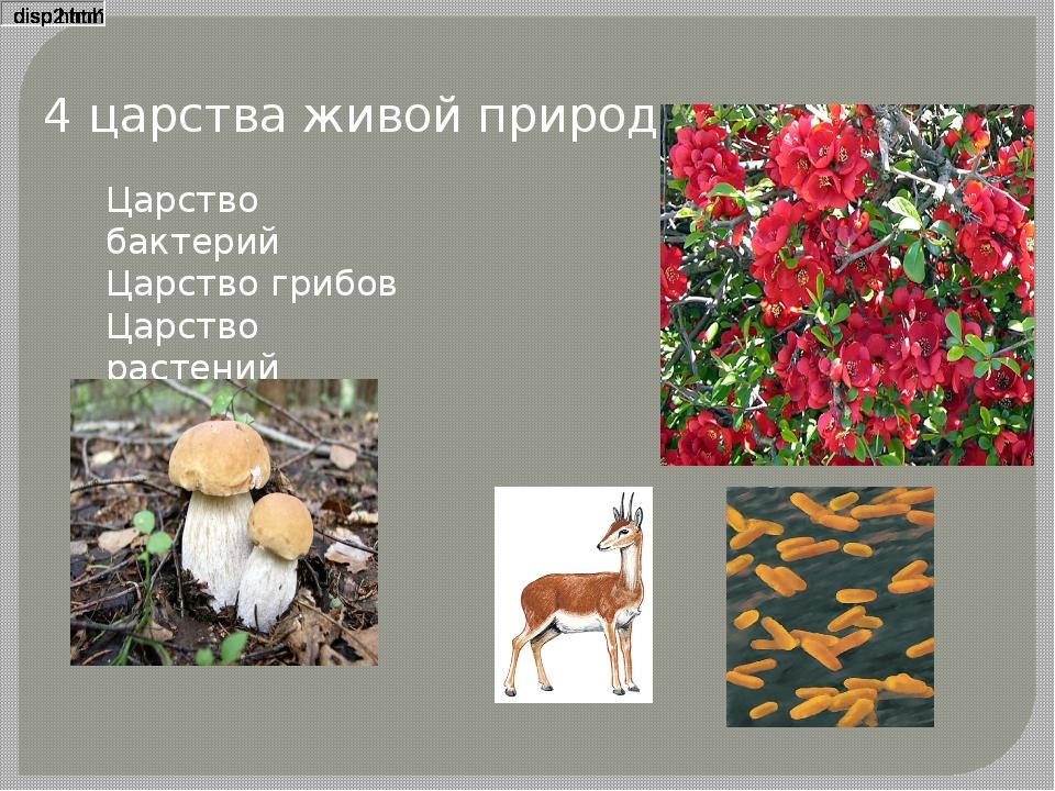 4 царства живой природы Царство бактерий Царство грибов Царство растений Царс...