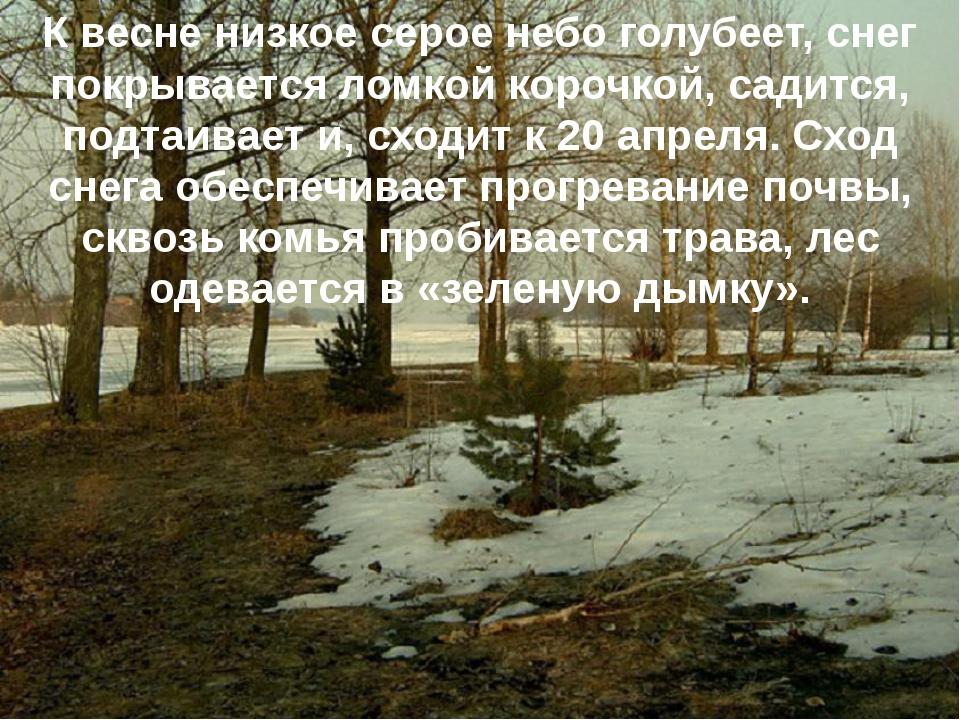 К весне низкое серое небо голубеет, снег покрывается ломкой корочкой, садится...