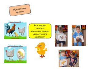 Презентация проекта Все, что мы узнали о домашних птицах, мы рассказали цыпле