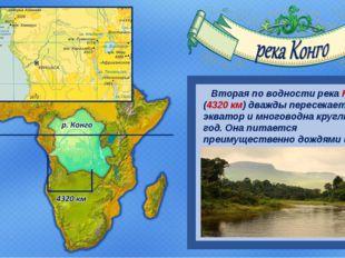 Вторая по водности река Конго (4320 км) дважды пересекает экватор и многовод