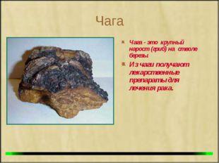 Чага Чага - это крупный нарост (гриб) на стволе березы. Из чаги получают лека