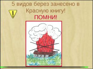 5 видов берез занесено в Красную книгу! ПОМНИ!