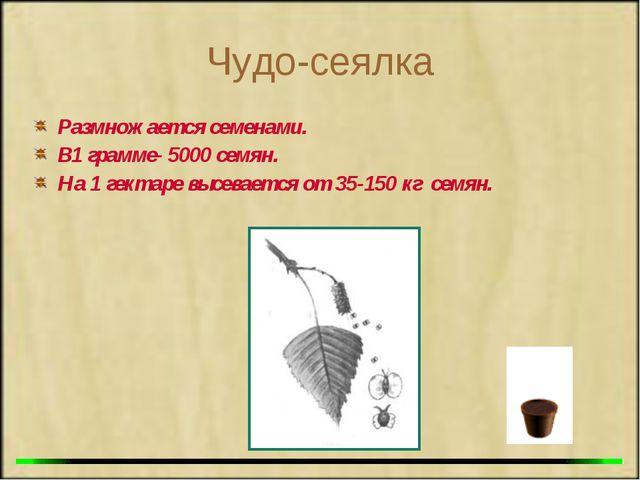 Чудо-сеялка Размножается семенами. В1 грамме- 5000 семян. На 1 гектаре высева...