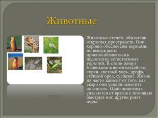 Животные степей- обитатели открытых пространств. Они хорошо обеспечены корма