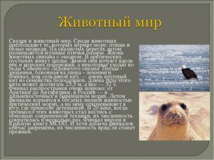 Скуден и животный мир. Среди животных преобладают те, которых кормит море: п