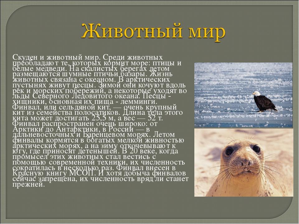 Скуден и животный мир. Среди животных преобладают те, которых кормит море: п...