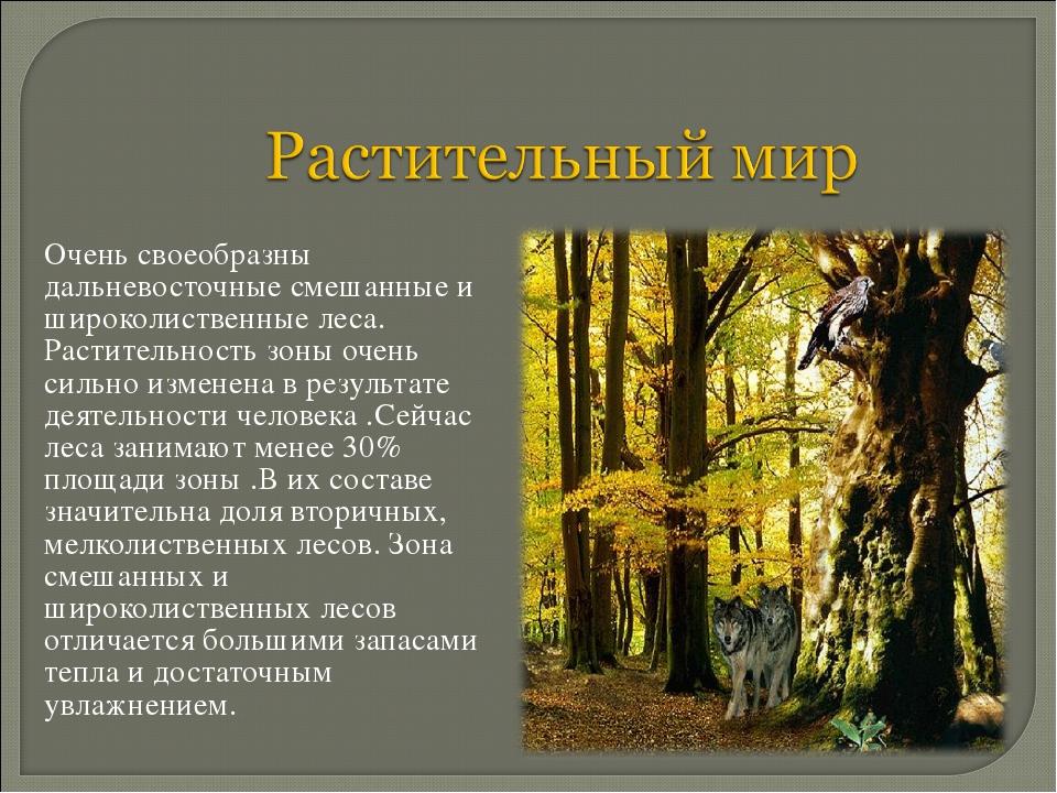 Очень своеобразны дальневосточные смешанные и широколиственные леса. Растите...