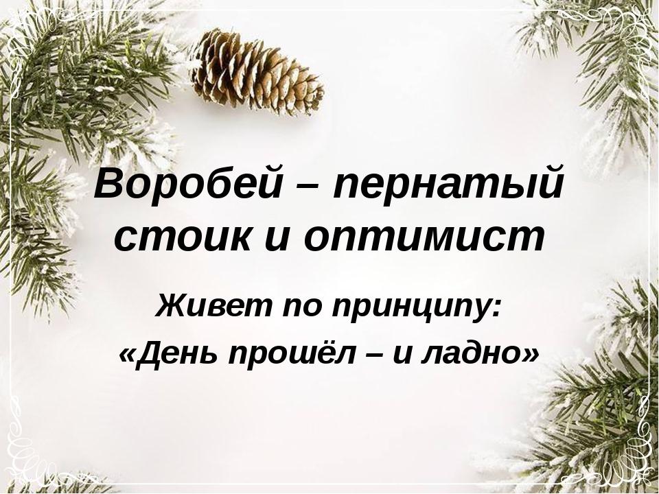 Воробей – пернатый стоик и оптимист Живет по принципу: «День прошёл – и ладно»