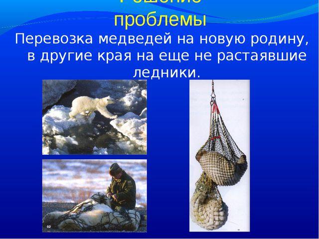 Решение проблемы Перевозка медведей на новую родину, в другие края на еще не...