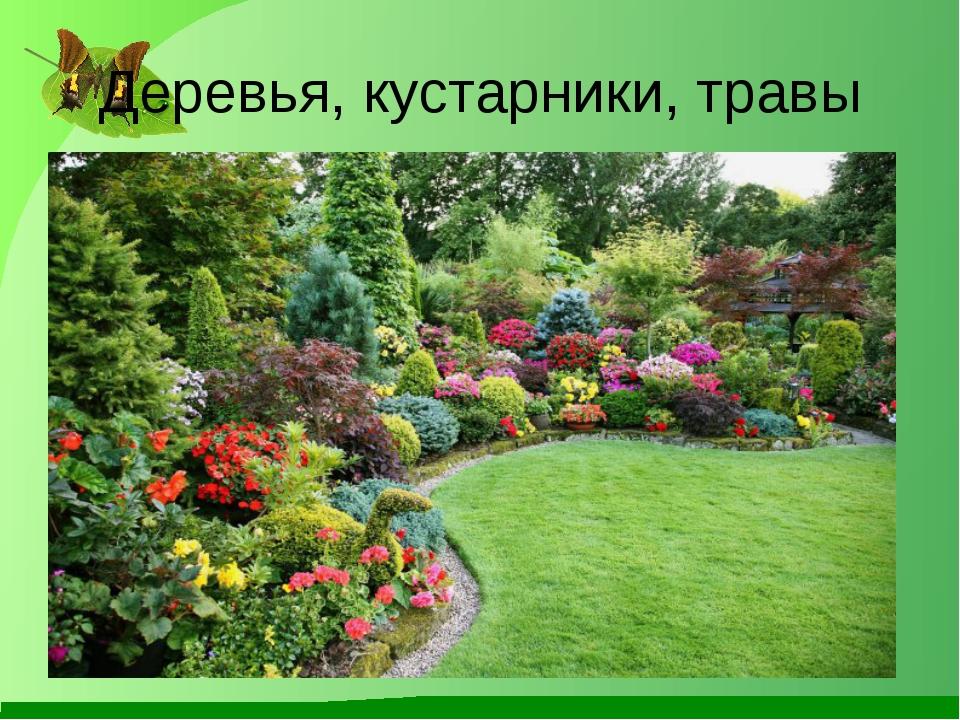 Деревья, кустарники, травы