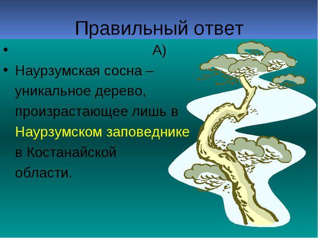 Правильный ответ А) Наурзумская сосна – уникальное дерево, произрастающее лиш...