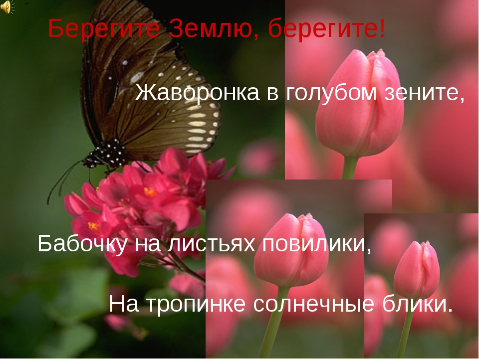 Берегите Землю, берегите! Жаворонка в голубом зените, Бабочку на листьях пови...
