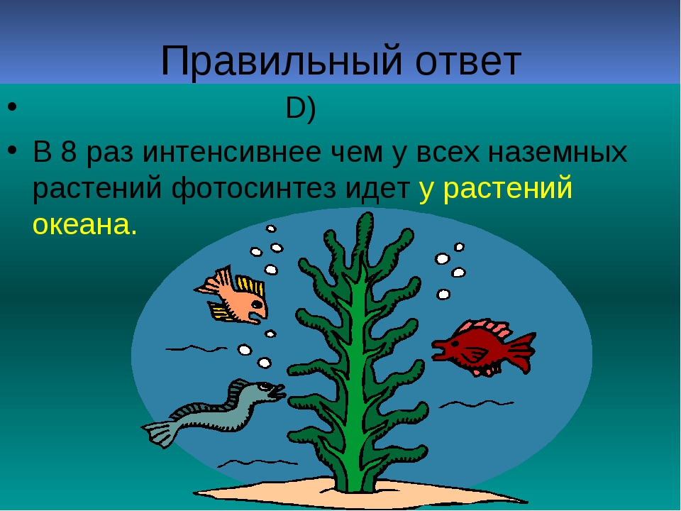 Правильный ответ D) В 8 раз интенсивнее чем у всех наземных растений фотосинт...