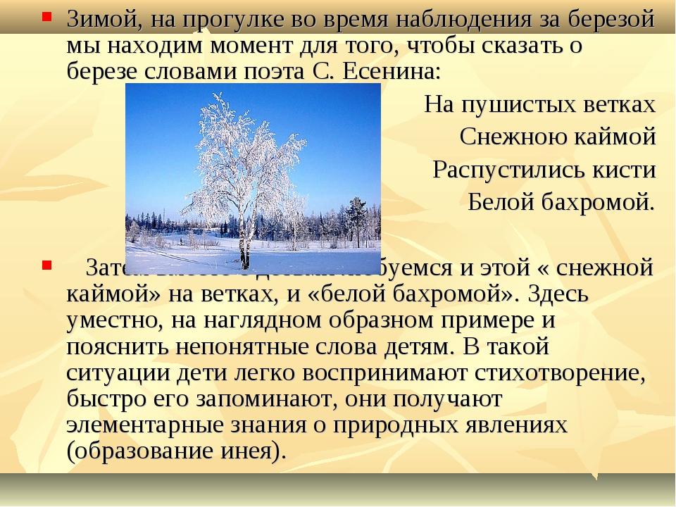 Зимой, на прогулке во время наблюдения за березой мы находим момент для того,...