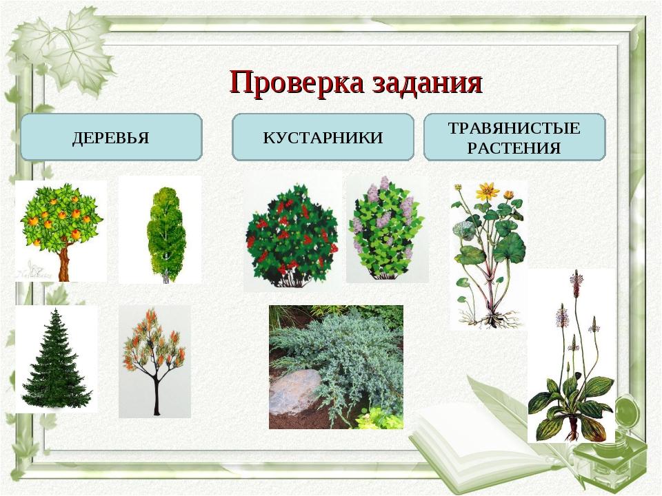Картинки групп растений деревья кустарники и травы левый правый